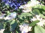 Цветочки на дереве