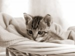 Черно-белый котей