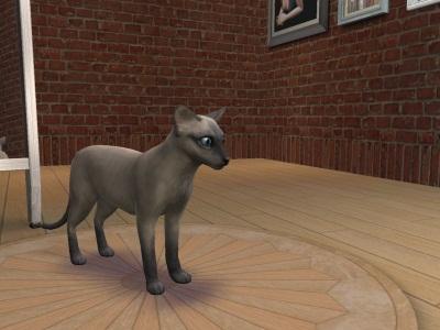 Порода кошек СФИНКС (Sims 2)