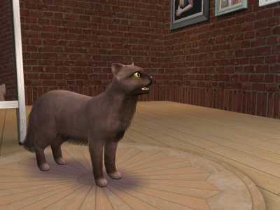 Кошка породы Фэнтэзи! (Sims 2)