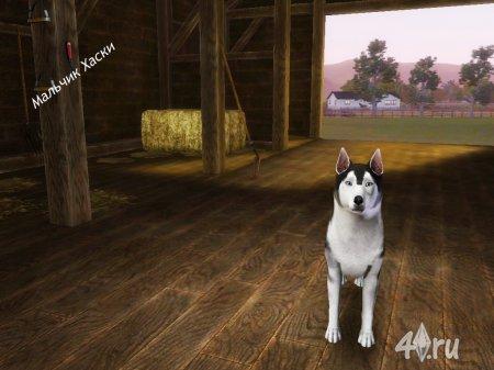 Собаки Хаски от Кота для Симс 3 в формате sims3pack